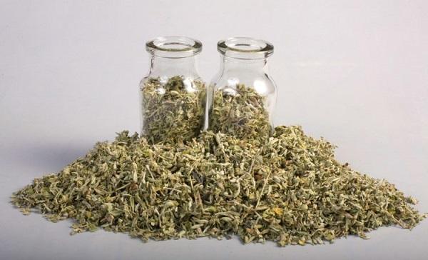 Sử dụng lá damiana pha trà uống để tăng khoái cảm ở nữ giới